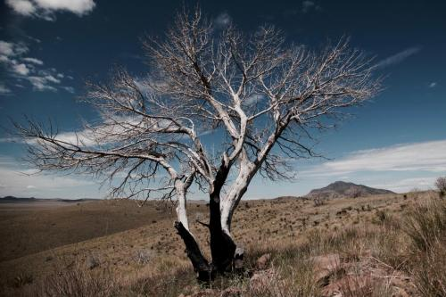 Lightning Tree - Davis Mountains SP